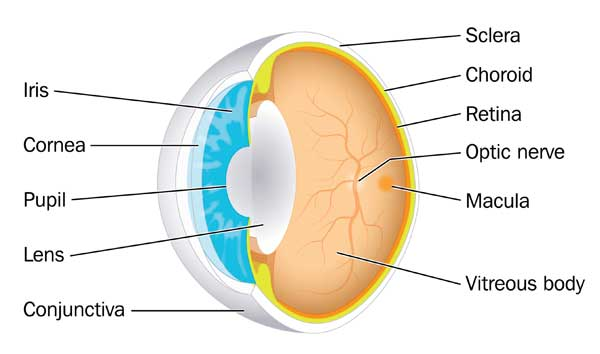 Retina Specialists Seattle, Retina Doctor Seattle, Opthalmologist ...